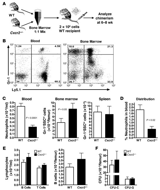 Cxcr2–/– neutrophils are selectively retained in the bone marrow of mix...