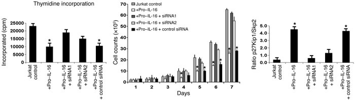 Effect of siRNA treatment on thymidine incorporation, total cell numbers...