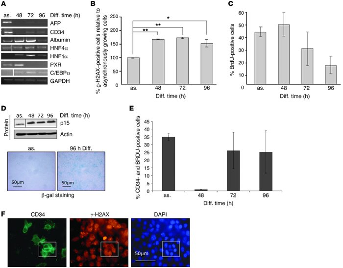 In vitro differentiation of progenitor cells recapitulates the in vivo p...