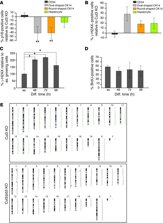 Maintenance of senescence by p53 is essential for preventing the generat...