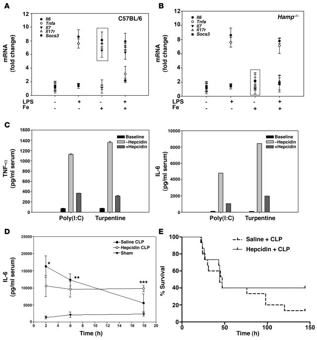 Effect of a high-iron diet on LPS-injected wild-type and Hamp–/– mice.  ...
