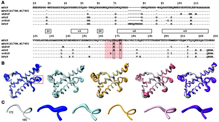 Amino acid sequence and 3-dimensional structure comparisons for WT mouse...