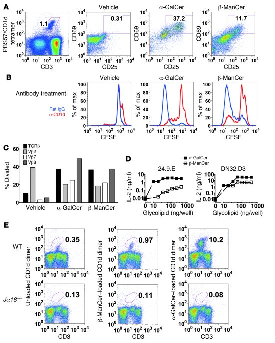 β-ManCer activates mouse iNKT cells. (A) Mouse splenocytes were stimulat...