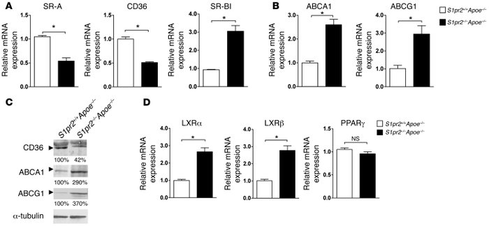 The effect of S1PR2 deficiency on the mRNA and protein expression of gen...