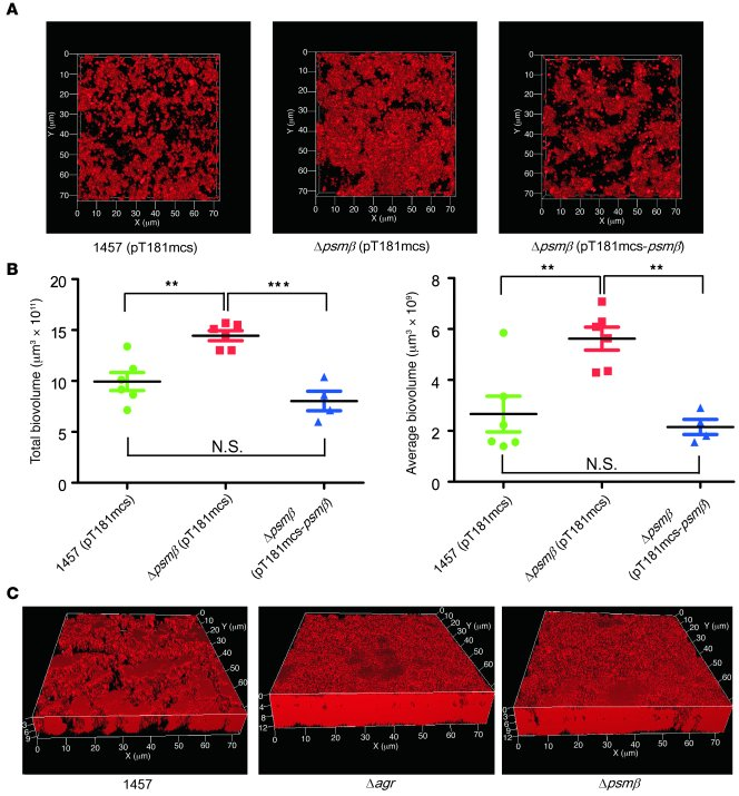 Role of PSMβ peptides and agr in S. epidermidis biofilm development: cha...