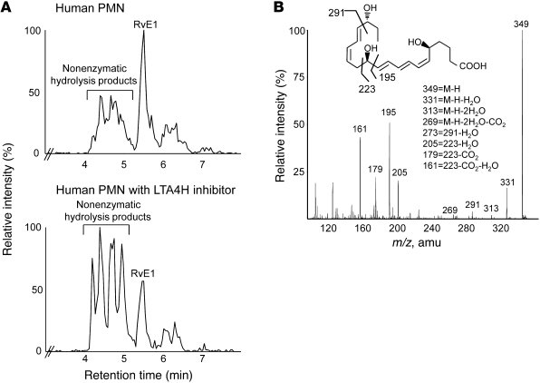 LTA4H in RvE1 biosynthesis. (A) Activated human PMNs were incubated with...