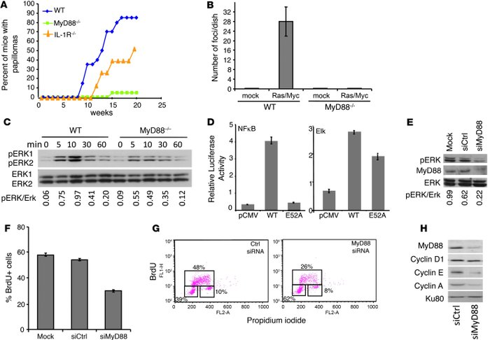 MyD88 is required for Ras transformation, full Erk activation, and cell ...