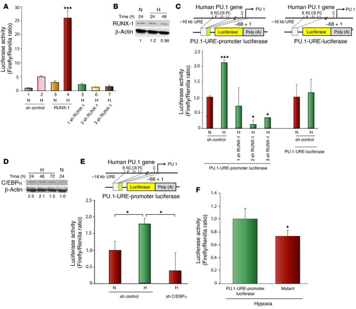Hypoxia-induced expression of PU.1 is regulated by RUNX-1 (AML1) and C/E...