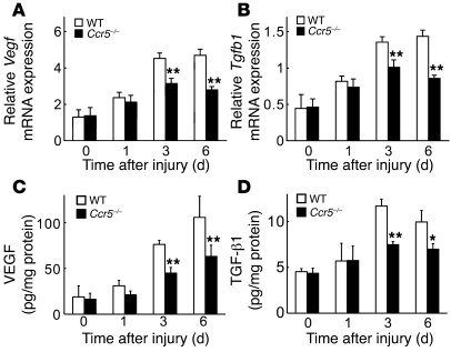 Decreased VEGF and TGF-β1 expression at wound sites in Ccr5–/– versus WT...