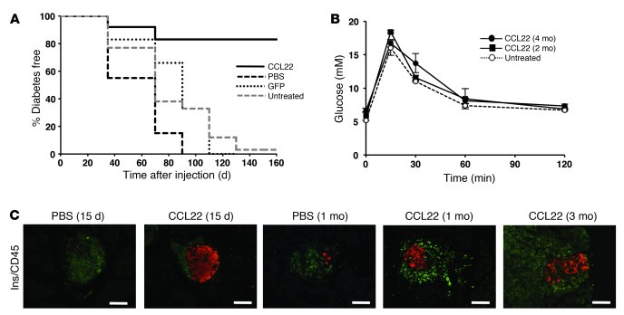 CCL22 expression in islets protects from diabetes development. (A) NOD f...