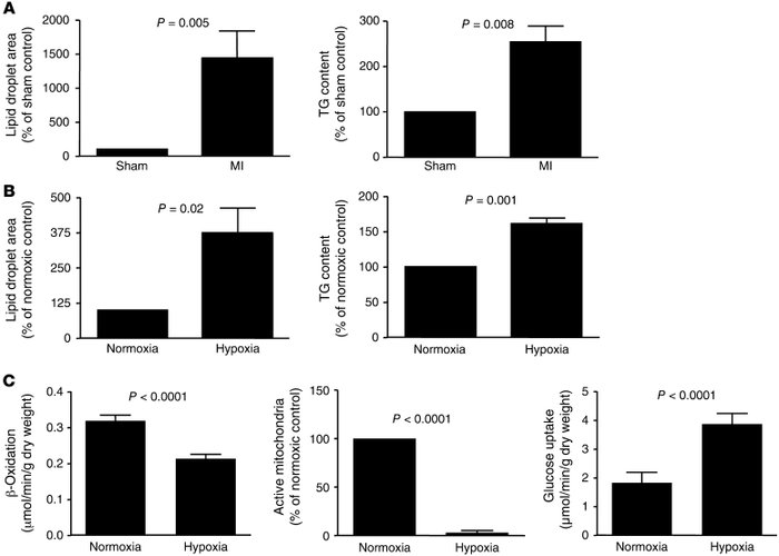 Ischemia/hypoxia induces triglyceride (TG) accumulation in mouse hearts ...