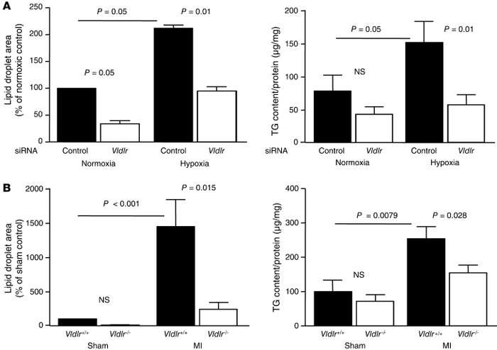 The VLDLR is required for triglyceride accumulation during hypoxia/ische...