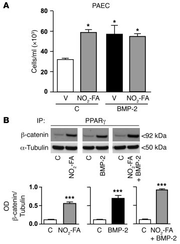 NO2-FA promotion of survival and induction of PPARγ/β-catenin complex fo...