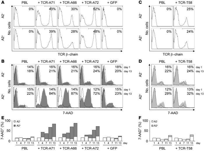 MHC-restricted fratricide of survivin-specific TCR-modified PBLs. HLA-A2...