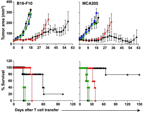 Adoptive transfer of multiple doses of DC101-CAR–transduced mouse T cell...