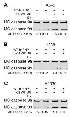 Low ectopic expression of hnRNP L decreases the caspase-9a/9b splicing r...