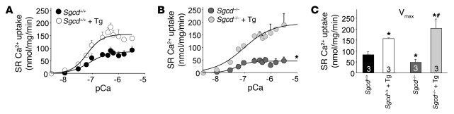SERCA1 enhances SR Ca2+ uptake in Sgcd–/– mice.     (A) Average mean val...
