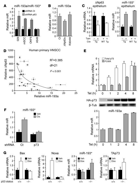 Endogenous p63 and p73 mediate miR-193a regulation by chemotherapy. (A) ...