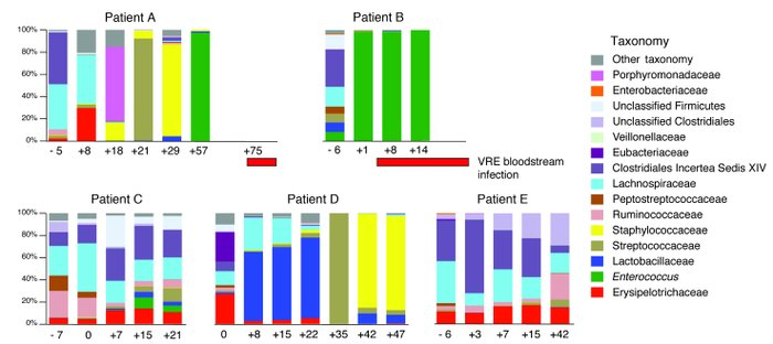 VRE dominates the intestinal microbiota in humans prior to invading the ...