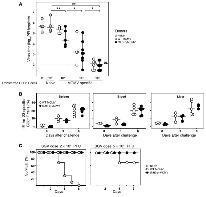 RAE-1γMCMV infection induces protective immunity.     (A) Donors of mem...