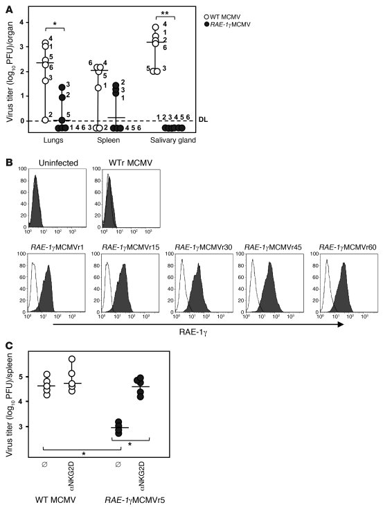RAE-1γ remains intact during latent RAE-1γMCMV infection.     (A) μMT/μ...