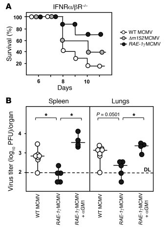 RAE-1γMCMV is attenuated in immunocompromised host.     (A) IFN-α/βR–/–...