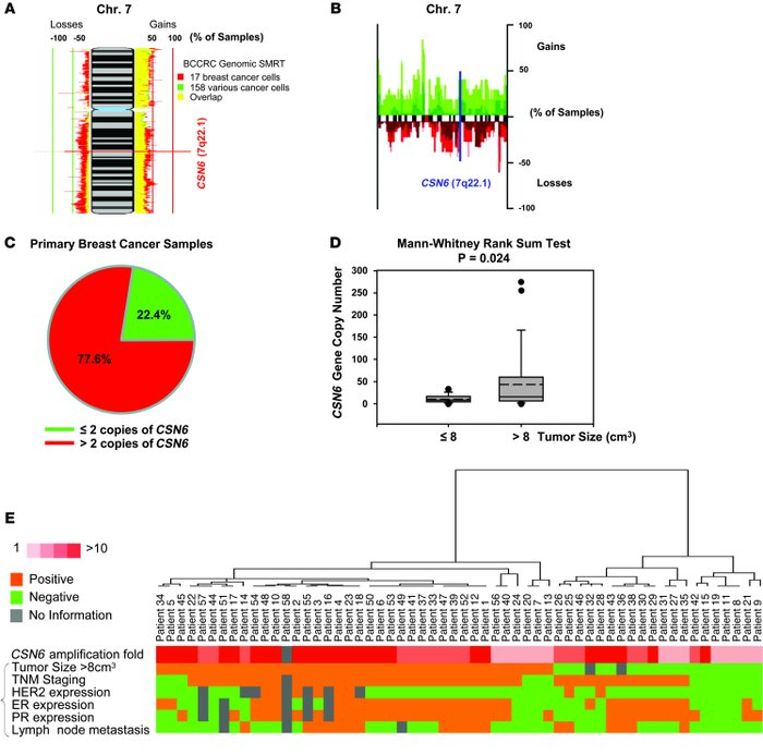 Amplification of CSN6 gene copy number in human breast cancers.     (A) ...