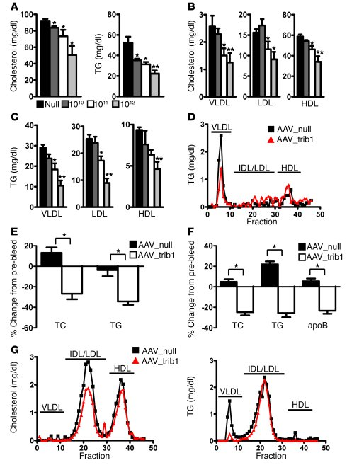 Hepatic Trib1 overexpression reduces plasma lipid levels in mice.     C5...