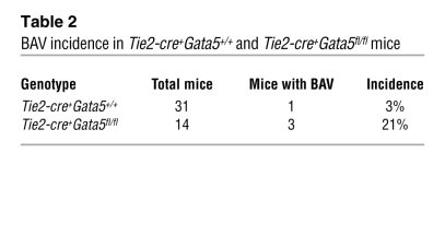 BAV incidence in Tie2-cre+Gata5+/+ and Tie2-cre+Gata5fl/fl mice