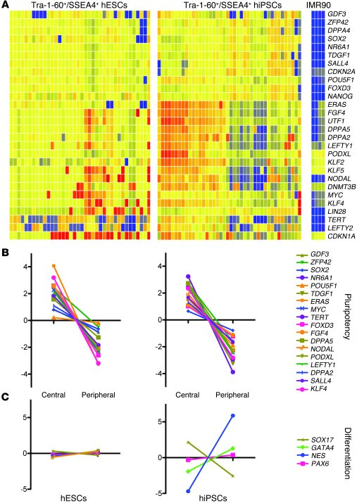 Immunophenotypic and positional variation in single cell gene expression...