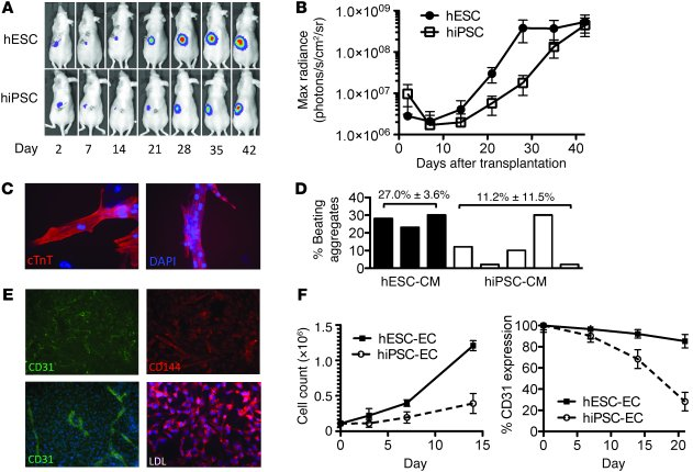 Limited growth and differentiation potential of hiPSC-derived cells. (A)...
