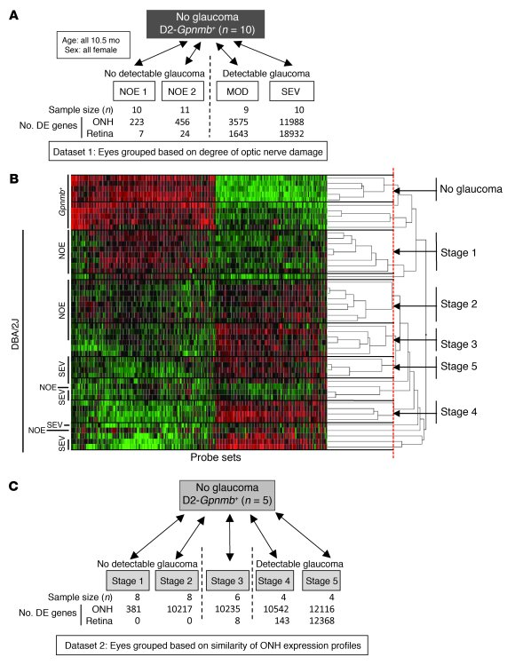 Early stages of glaucoma identified by hierarchical clustering. (A) Pair...