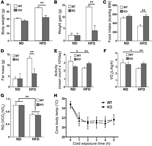 Parkin–/– mice (KO) are resistant to HFD-induced weight gain and have p...