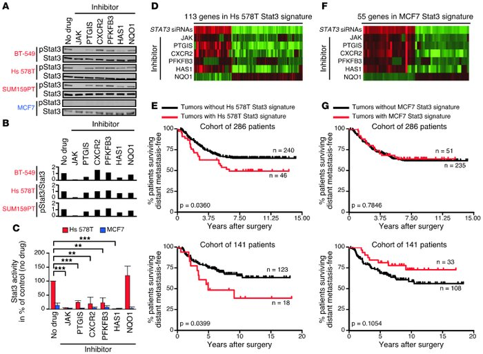 Regulation of the JAK2/Stat3 pathway in basal-like breast cancer cells a...