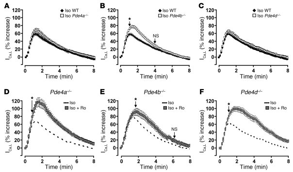 Pde4b inactivation potentiates the β-AR stimulation of the ICa,L in AMV...
