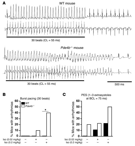 Increased susceptibility to VT upon β-AR stimulation in Pde4b–/– mice.  ...