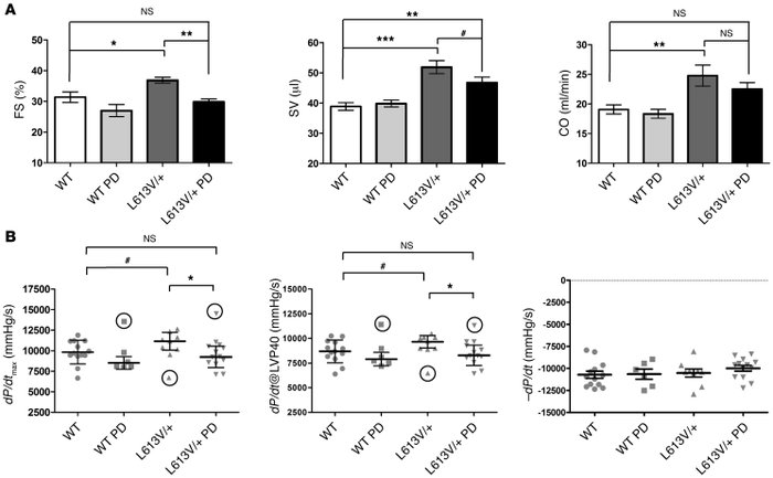 MEK inhibitor treatment normalizes cardiac function in L613V/+ mice. (A)...
