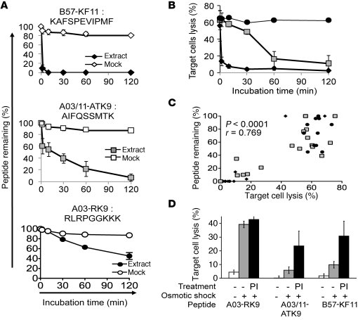 Intracellular HIV epitope stability is variable and degradation is corre...