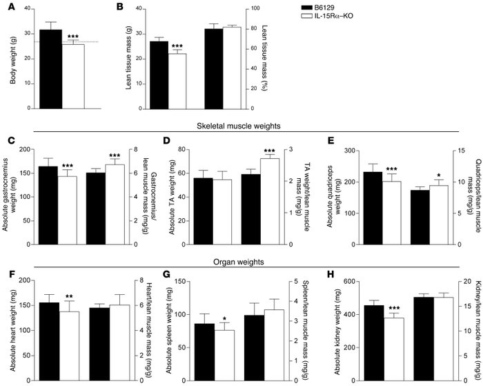 Body weight, skeletal muscle, and organ weights in IL-15Rα–KO mice. (A) ...