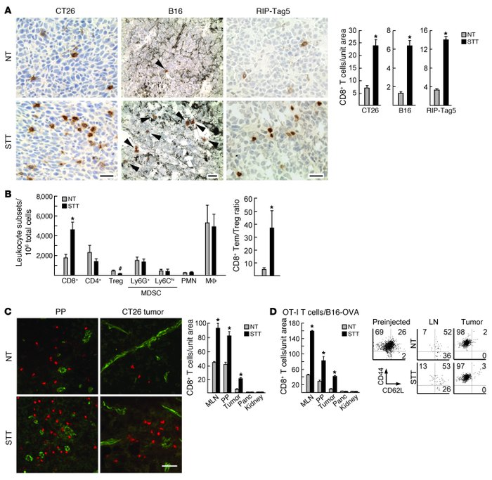 Homeostatic and thermally inducible trafficking of CD8+ T cells at organ...
