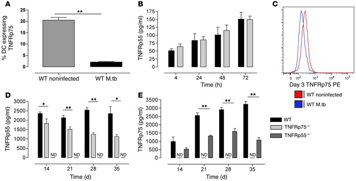 M. tuberculosis induces TNFR shedding.   (A and B) WT and TNFRp75–/– BM...