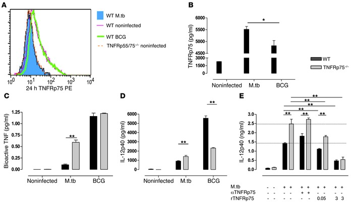 DC activation is dependent on soluble TNFRp75 inactivation of bioactive ...