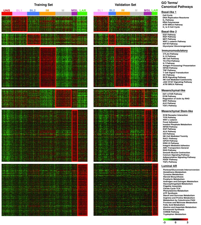 GE patterns within TNBC subtypes are reproducible. Heat maps showing the...