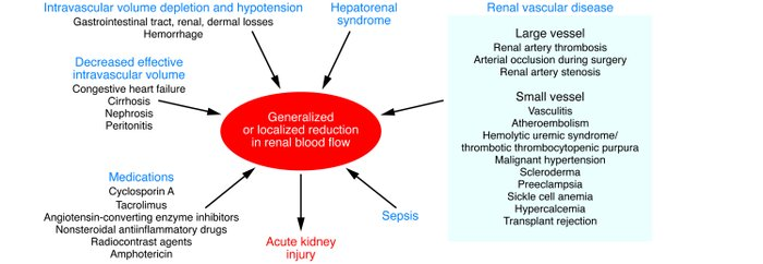 Causes of reduction in generalized or regional renal blood flow (RBF). V...