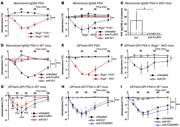 Neutrophils and FcγRIV account for IgG2b-IC induced PSA in WT mice, and ...