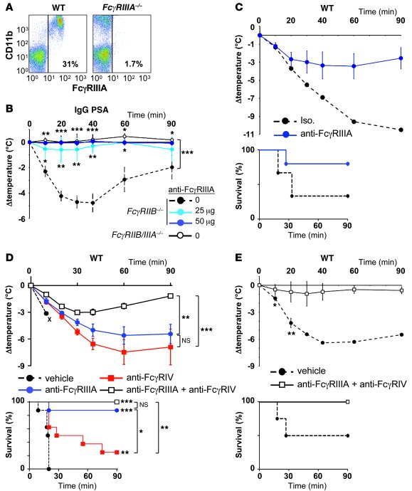 FcγRIIIA and FcγRIV account for ASA in WT mice. (A) Representative densi...
