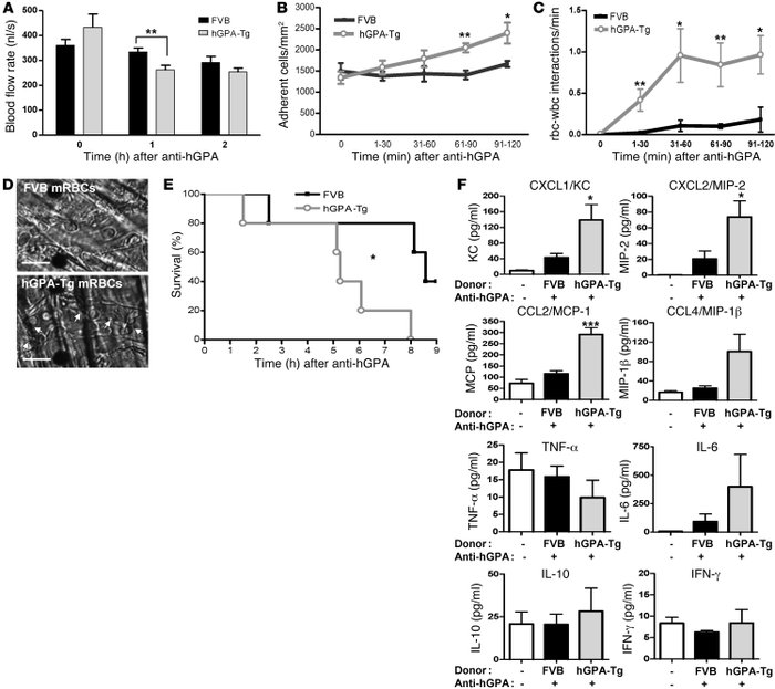 HTRs induce acute VOC and cytokine production in SCD mice. SCD mice (n =...