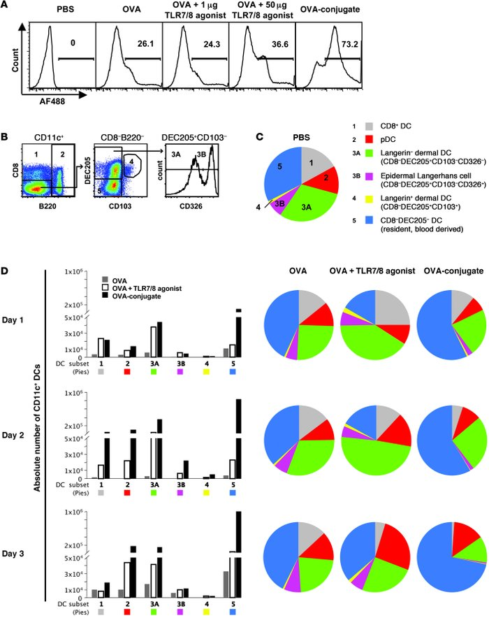OVA vaccines induce distinct changes in the composition of DCs within th...