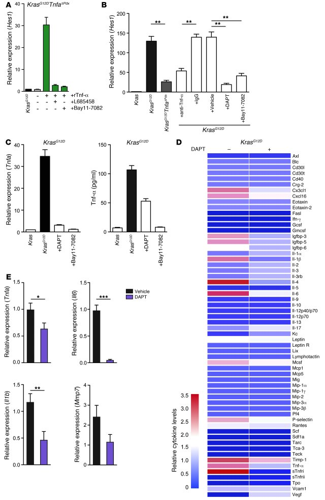Inhibition of Notch/NF-κB signaling attenuates the inflammatory profile ...