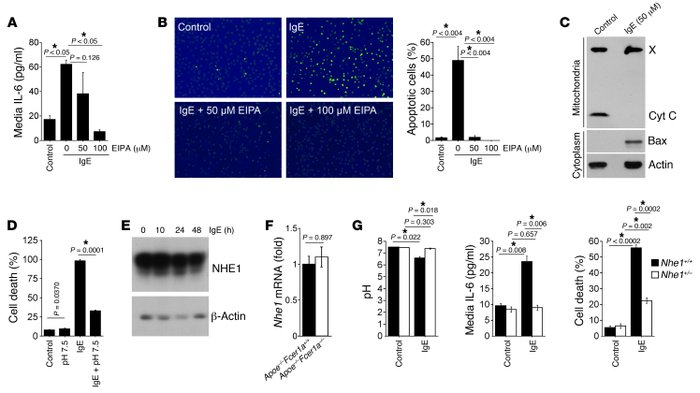 NHE1 activity–dependent mouse peritoneal macrophage cytokine production ...